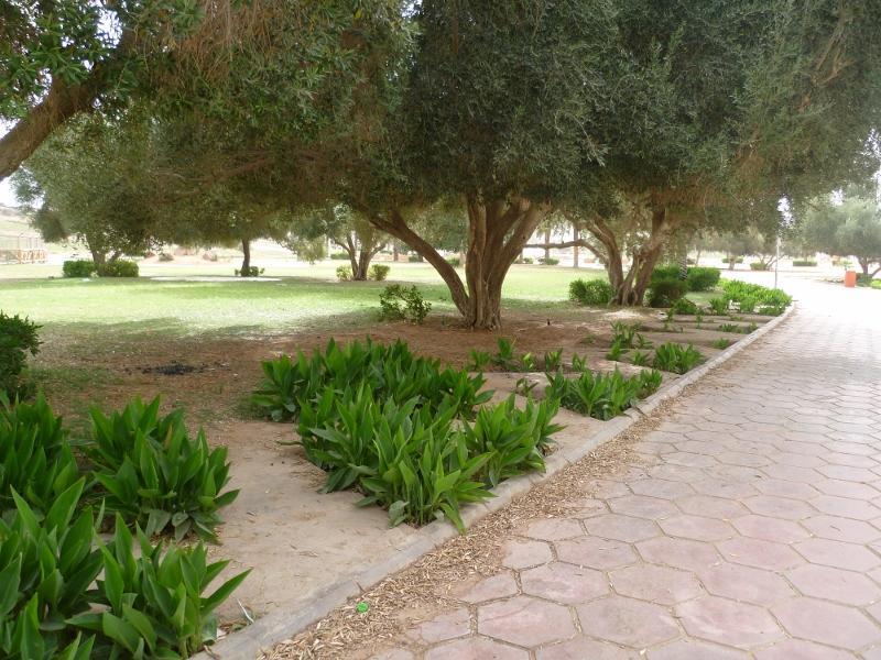 حديقة الزيتون