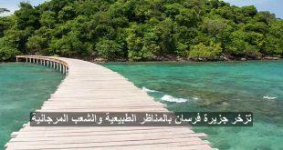 جزيرة الفرسان